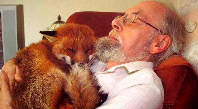 Man Rescues Fox & Becomes Its Best Friend