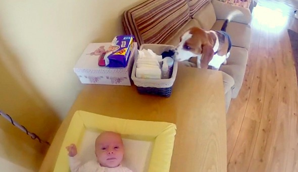 5.22.14 - Dog Helps Change Baby's Diaper1
