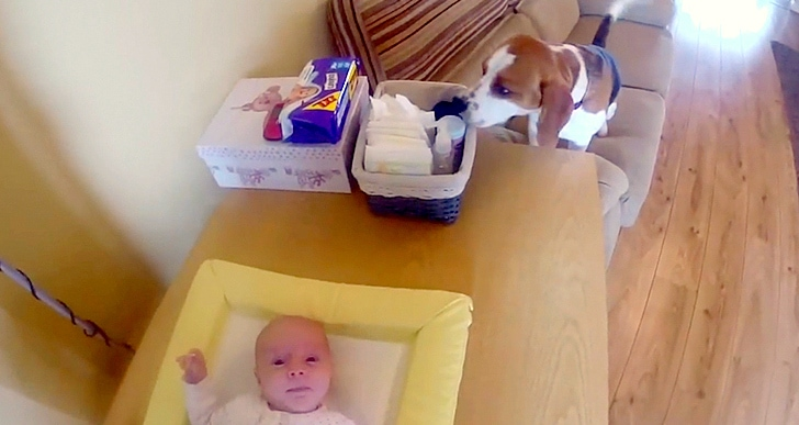 5.22.14 - Dog Helps Change Baby's Diaper2