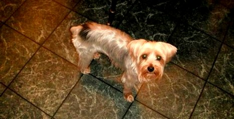 Family Outraged by Mailman's Murder of Their Yorkie