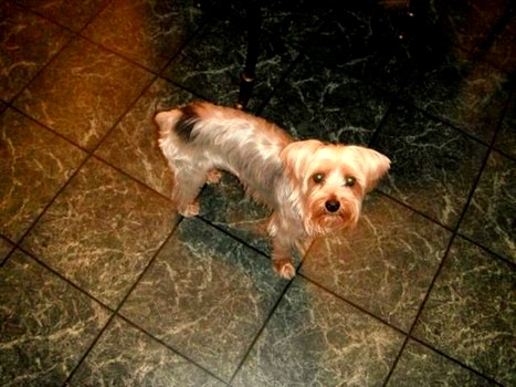 Family Outraged By Mailman S Murder Of Their Yorkie