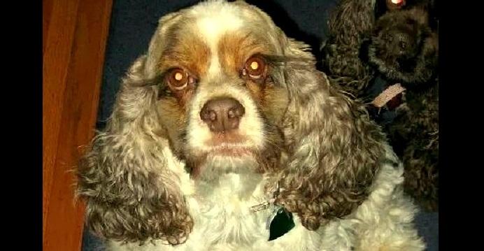 Suffering Dog Desperately Needs Surgery