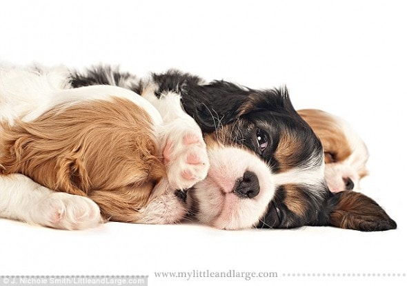 5.28.14 - Cute Six Week Old Puppy Photos will melt your Heart16