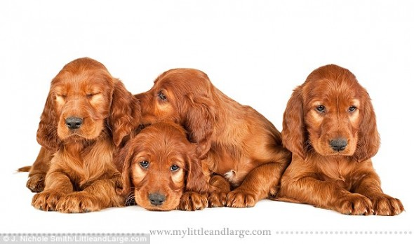 5.28.14 - Cute Six Week Old Puppy Photos will melt your Heart9