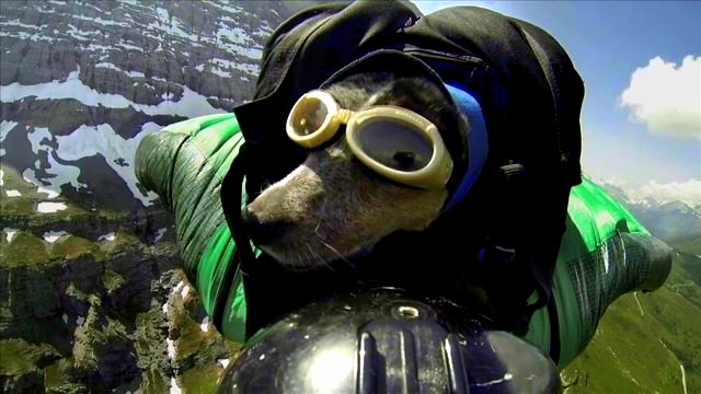 World's First Wingsuit BASE-Jumping Dog