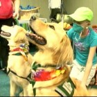 Hospital Throws Birthday Party for Therapy Dogs