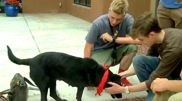 5.29.14 - Teen Boys Save Dying Dog2
