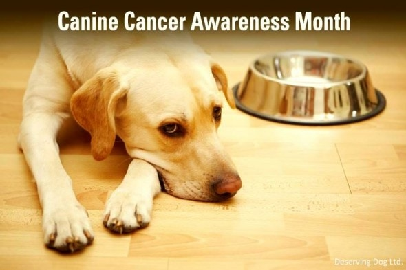 Dogs going through cancer treatment often lose their appetite. We want to change that.