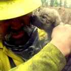Firefighters Rescue Orphan Wolf Puppies from Alaskan Wildfire