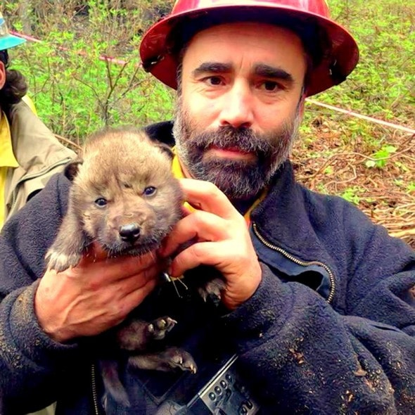 5.31.14 - Alaskan Firefighters Rescue Wolf Puppies8