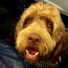 Emergency Landing After Dog Keeps Pooping on Plane