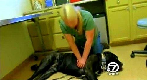 Nurse Saves Dog Using CPR