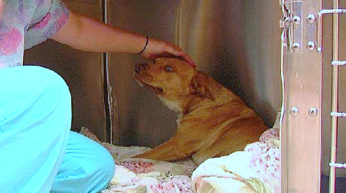 Stray Dog in Texas Crawls to Help After Being Shot