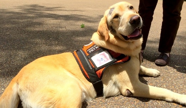 Booster the Service Dog Gets Stem Cell Therapy in Mississippi