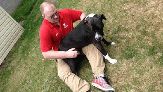 Dog Saves Military Vet by Calling 911