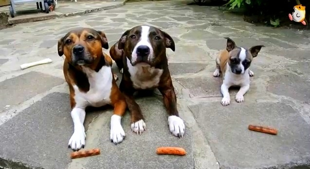 Three Dogs, Three Treats…
