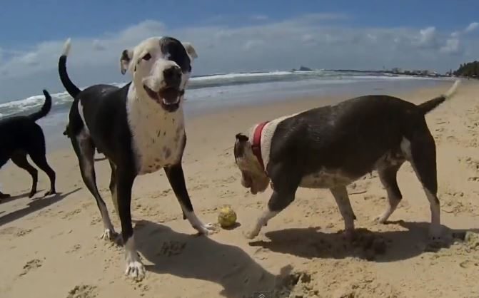 HAPPY DOGS in Australia – Pharrell Williams – Happy