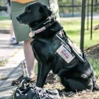 VetDogs Run Helps Provide Service Dogs to Disabled Veterans