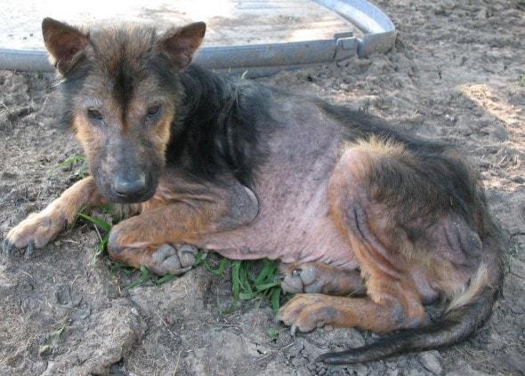 Delbert when rescued