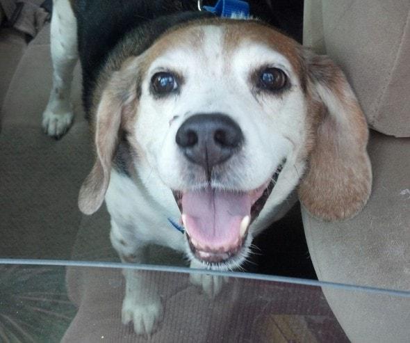 Photo Courtesy of Muttville Senior Dog Rescue