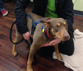 Runaway Injured Dog Finds Forever Home