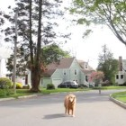 Good or Bad Idea: Get a Drone to Walk Your Dog