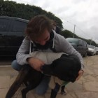 Dog Reunited with Owner after Walking Hundreds of Miles