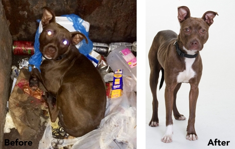 St. Louis Dumpster Dog Rescued and Waiting for Forever Home