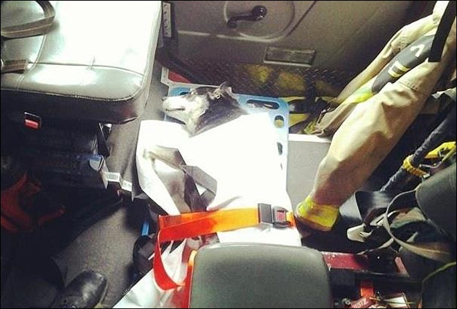 Dog Survives Life Threatening Injuries Thanks to Wash. Firefighters