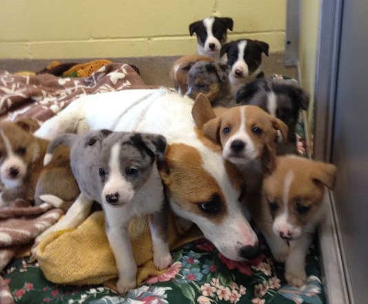 Nine Homeless Puppies Saved from High-Speed Road