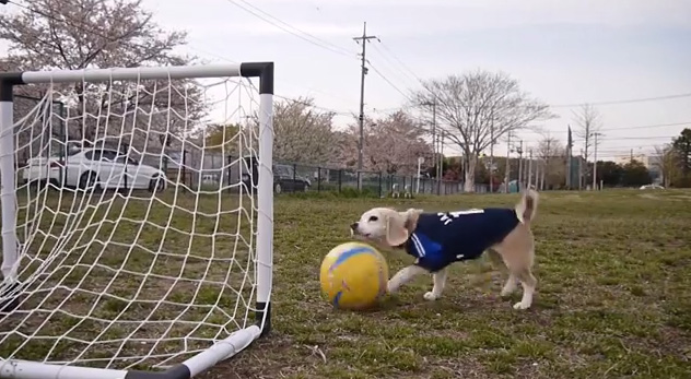 Can Your Dog Play Soccer?