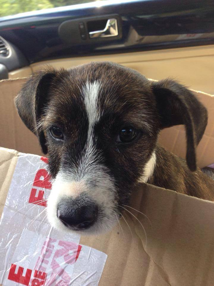 Driver Rescues Puppy Tossed Out from Car Window
