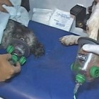 Paramedics Equipped with Pet Oxygen Masks Save Two Chicago Dogs
