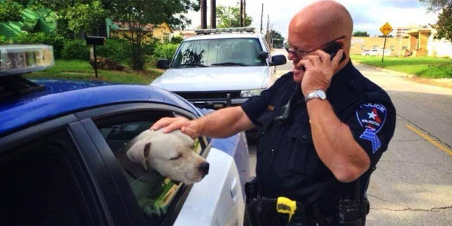"Police Officers Rescue ""Vicious"" Pit bull and Reunite Him with Owner"