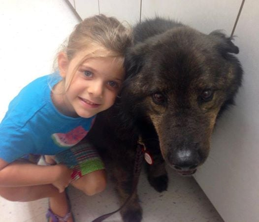 Update: Dog Rescued from Rain Now Waits for Forever Home
