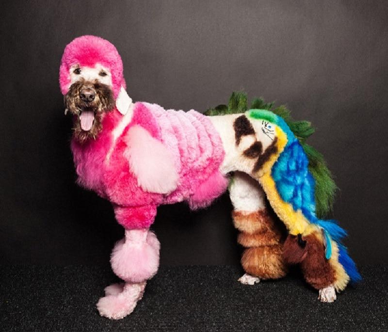 Happy Days Dog Grooming