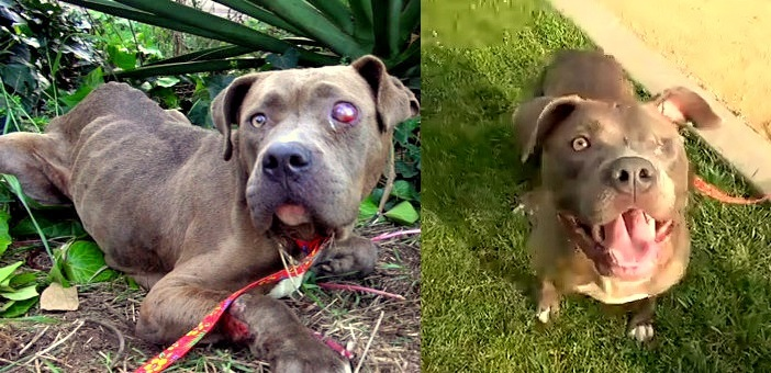Blinded, Starving Dog Gets the Rescue of a Lifetime