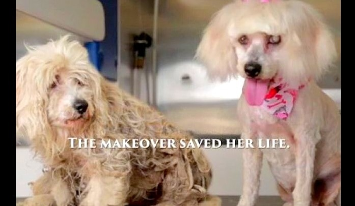 Partially Blind Homeless Dog Gets Makeover that Saves Her Life