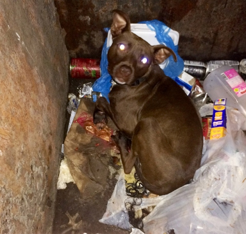 6.10.14 - Reward Offered in Case of Puppy Found Half-Starved and Left in Dumpster