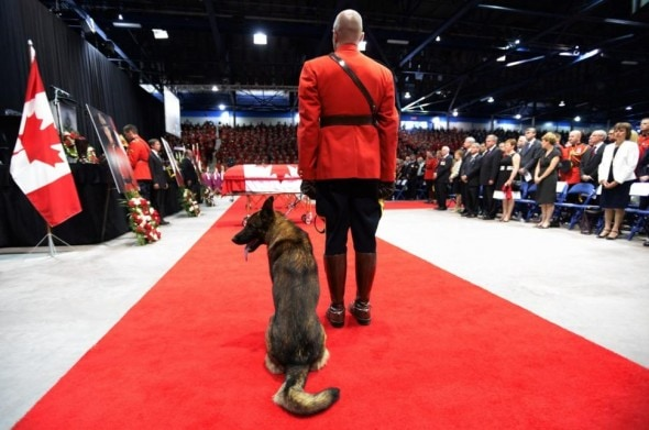 6.12.14 - Canine Partner of Slain Mountie Cries at Funeral2