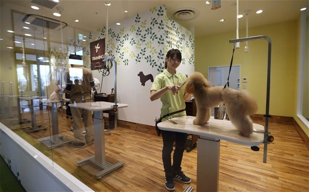 First Elderly Dog Retirement Home Opens in Japan