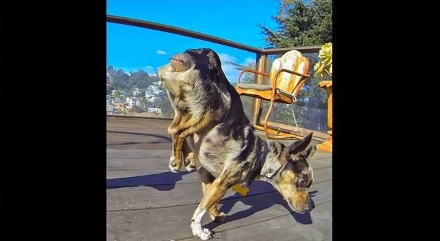 Paralyzed Homeless Dog Learns to Walk Again