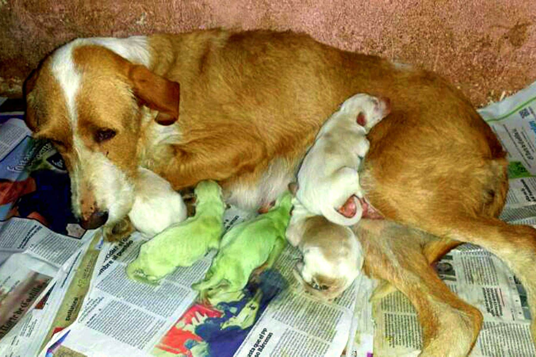 Puppies in Spain Born with Green Fur