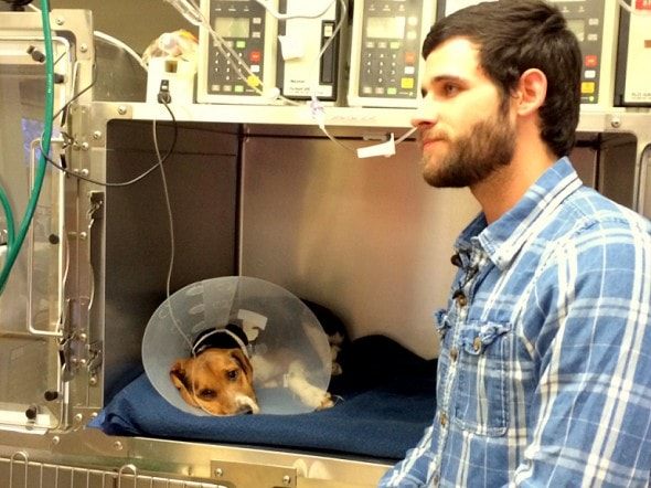 6.13.14 - Army Vet Rescues Beagle Hit by Car & Left to Die4