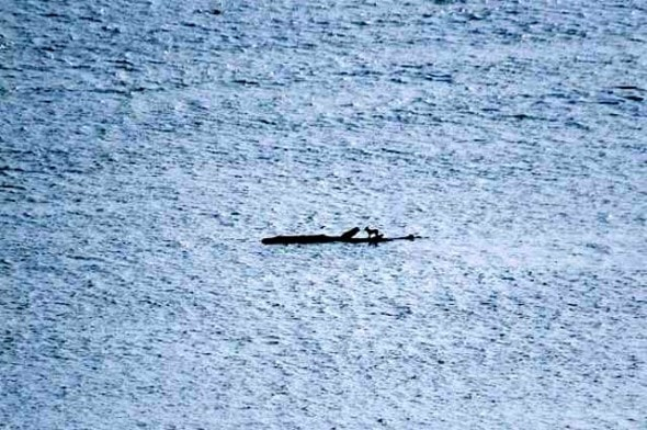 6.14.14 - New Zealand Navy Rescues Dog Stranded at Sea0