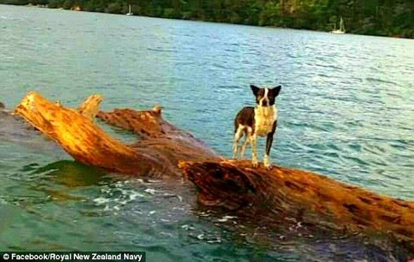 6.14.14 - New Zealand Navy Rescues Dog Stranded at Sea2