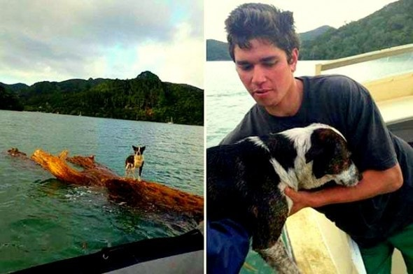6.14.14 - New Zealand Navy Rescues Dog Stranded at Sea3