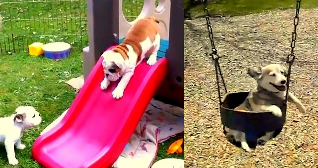 Dogs Who Just LOVE the Playground