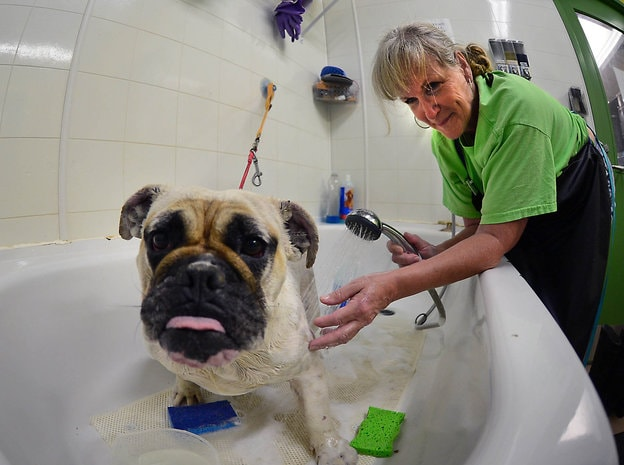 Dogs Rescued From Puppy Mill Raid