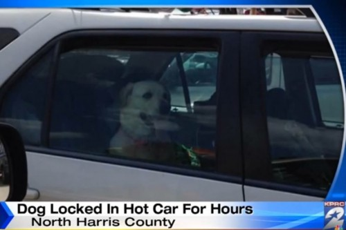 Woman Sees Dog Trapped in Hot Car, Calls Cops and Posts Photo to Facebook
